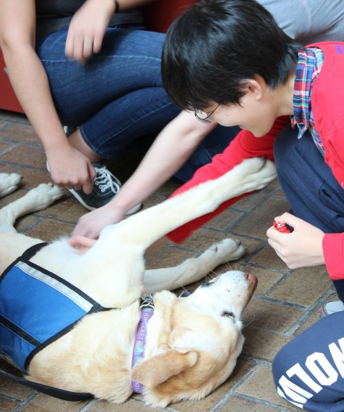 Pet Therapy at the Library