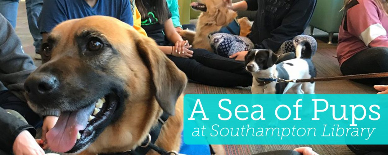 Sea of pups at Southampton Library