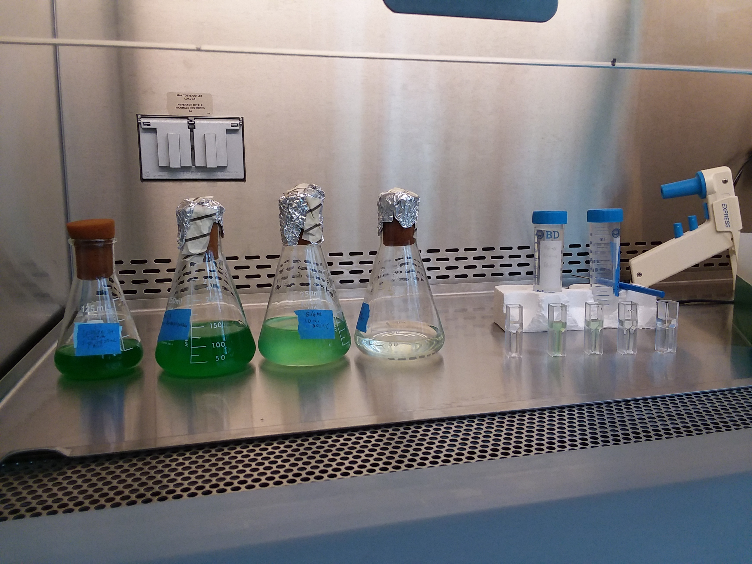 The Sucrose Factory: Engineering Cyanobacteria to Sink Carbon