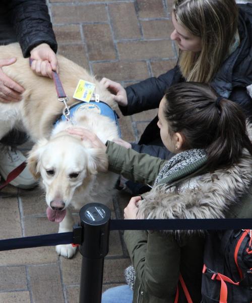 Students petting dog